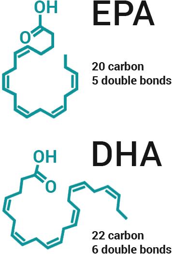 EPA & DHA Molecules